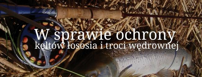 W sprawie ochrony keltów łososia i troci wędrownej