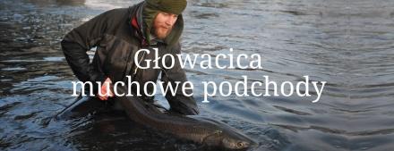 Głowacica – muchowe podchody